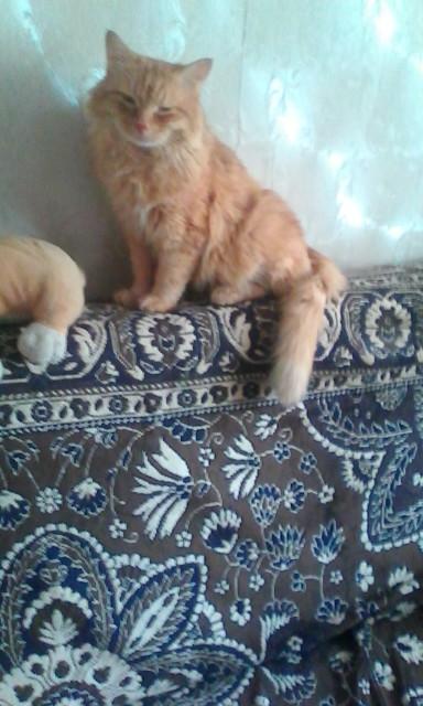 Наш любимый Персик на отдыхе с собачкой.. Блиц: милые котики