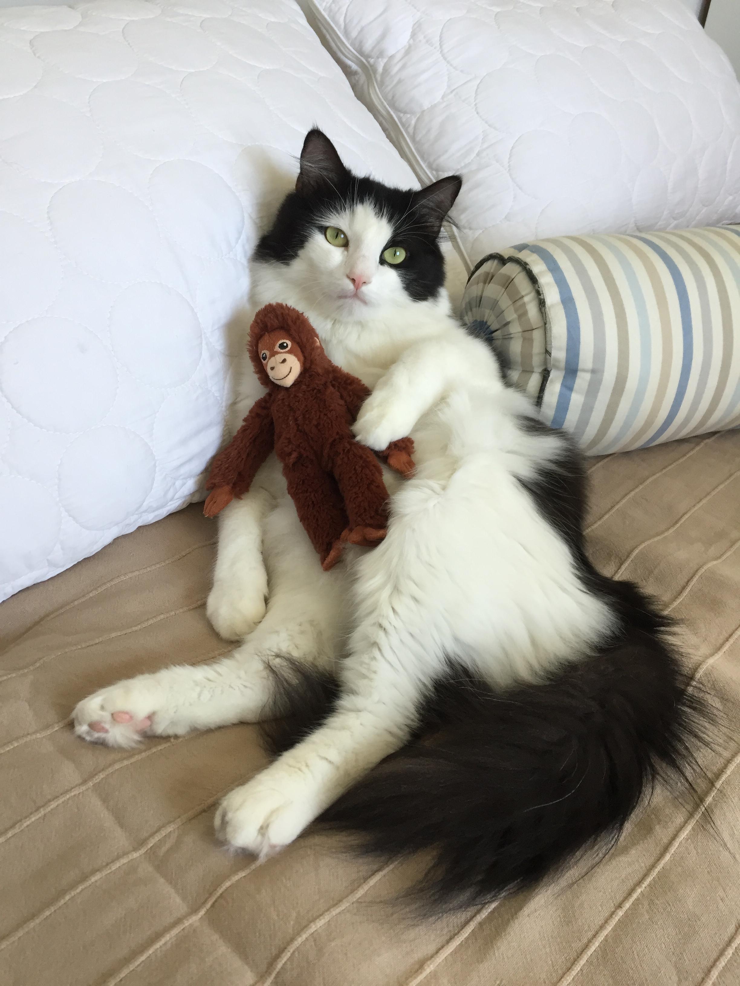 С любимой игрушкой. Блиц: милые котики