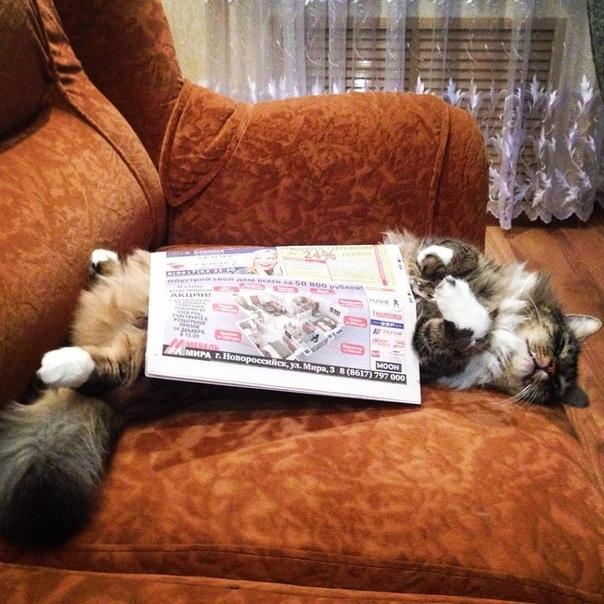 Наш котик Том очень любит 'читать'. Блиц: милые котики