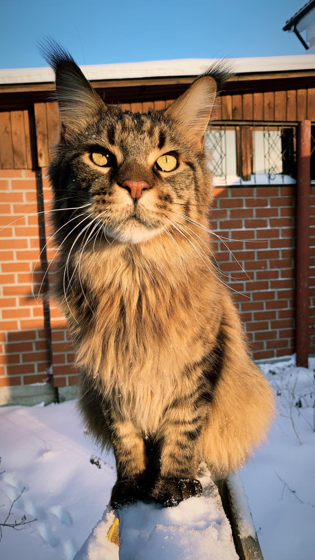 Котейка Тризор. Блиц: милые котики
