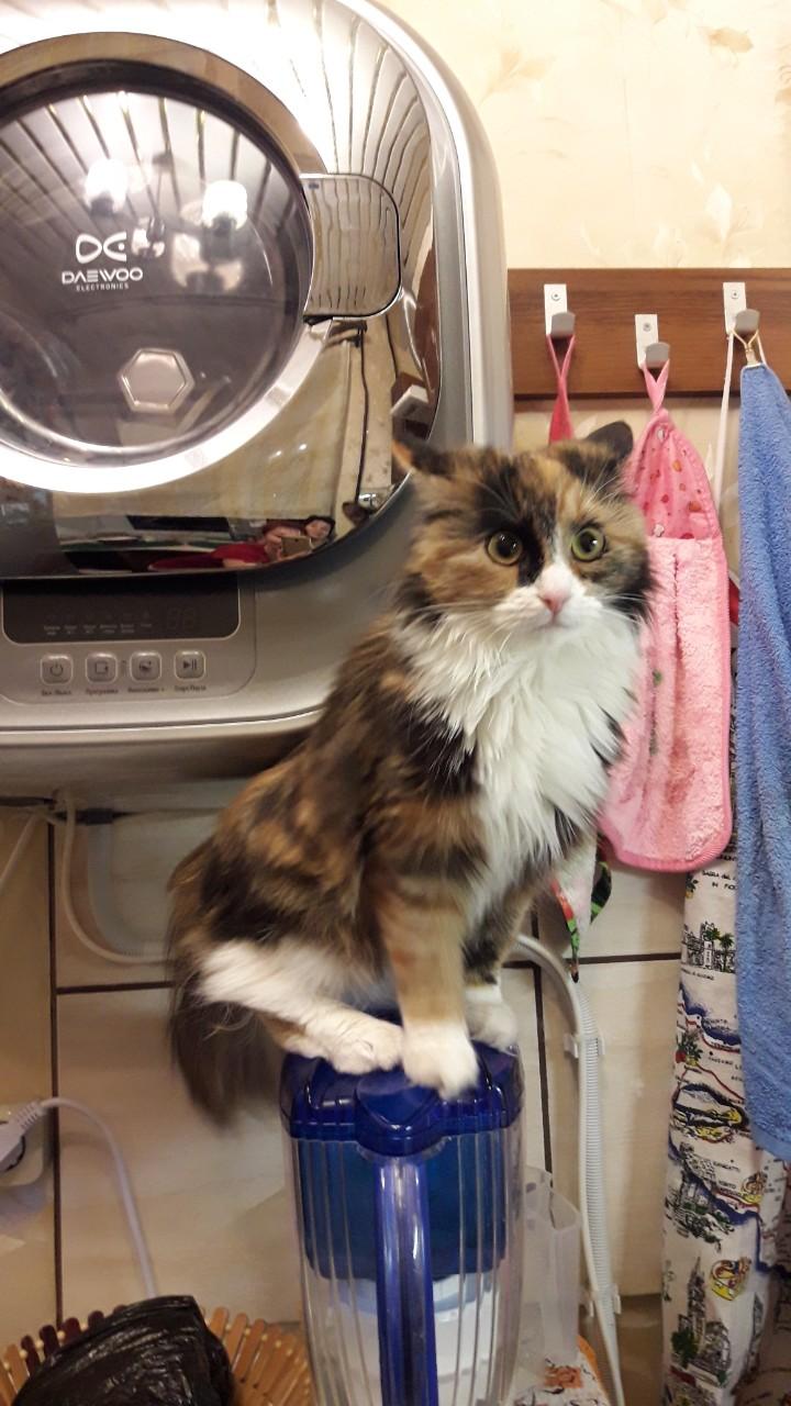 Кошка с кувшином. Блиц: милые котики