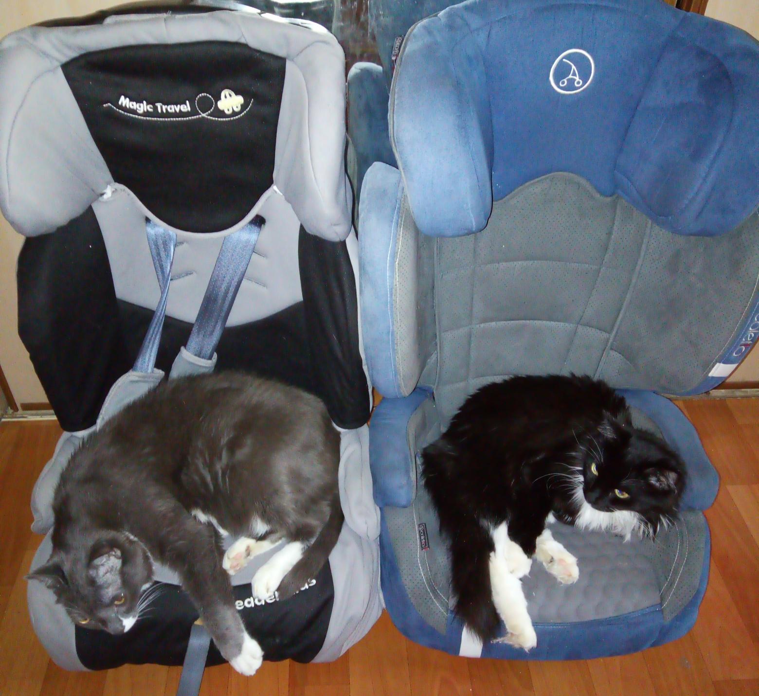 Отжали кресла у малых =)) . Блиц: милые котики