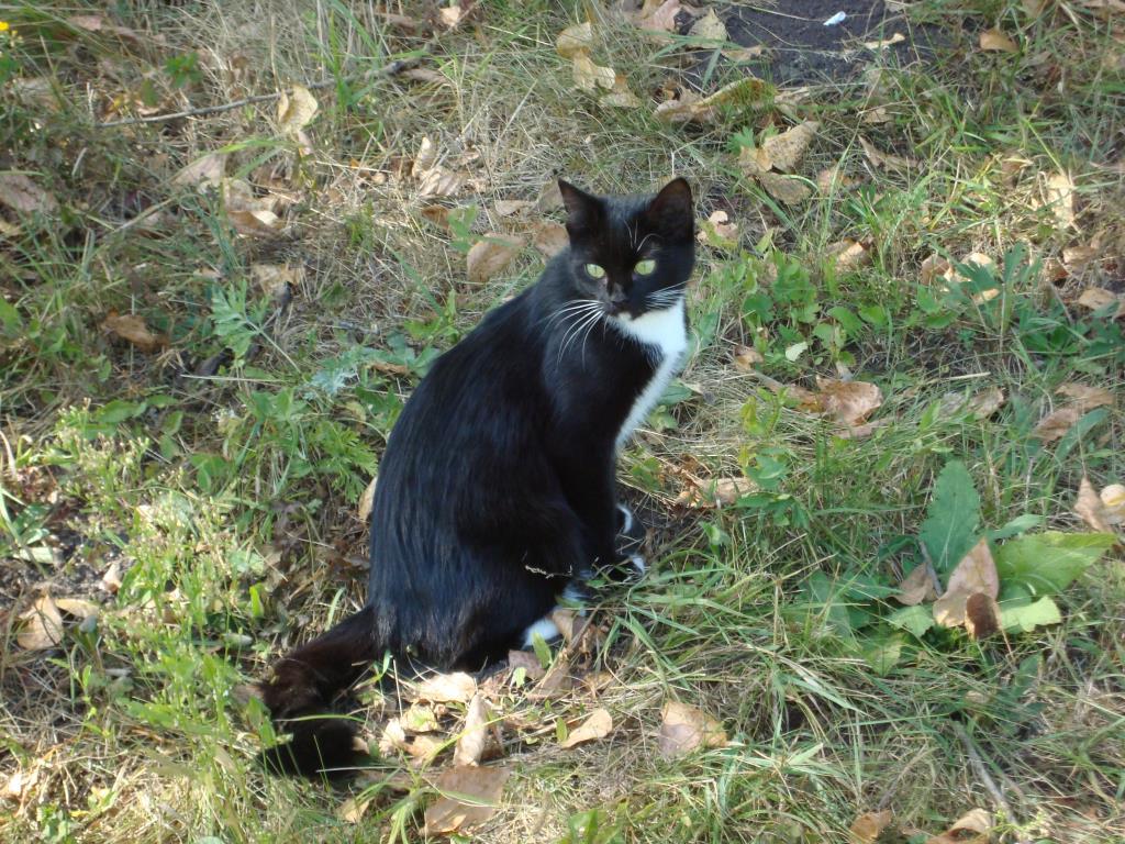 прогулка в лесу. Блиц: милые котики