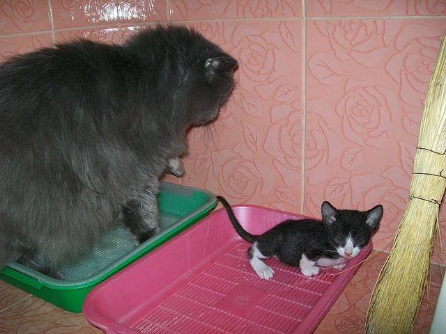Блиц: милые котики. Блиц: милые котики
