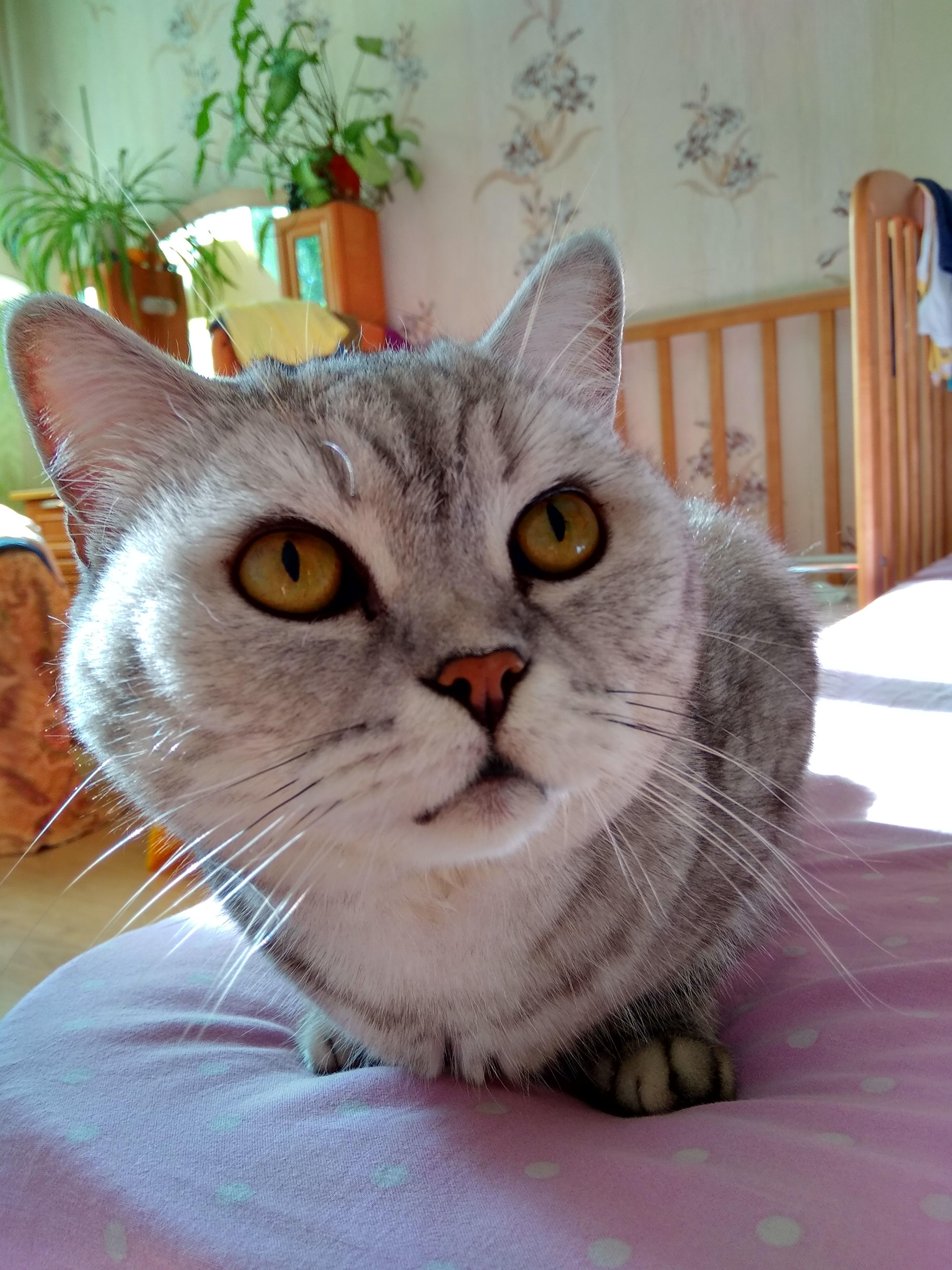 Алиса. Блиц: милые котики