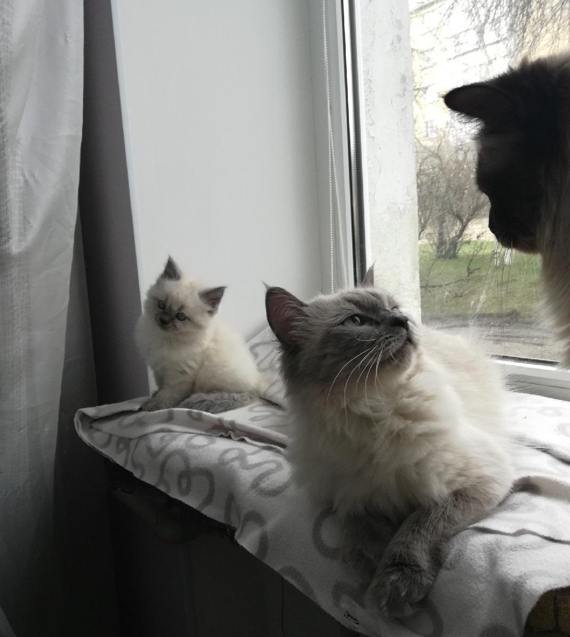 Семейные отношения. Блиц: милые котики