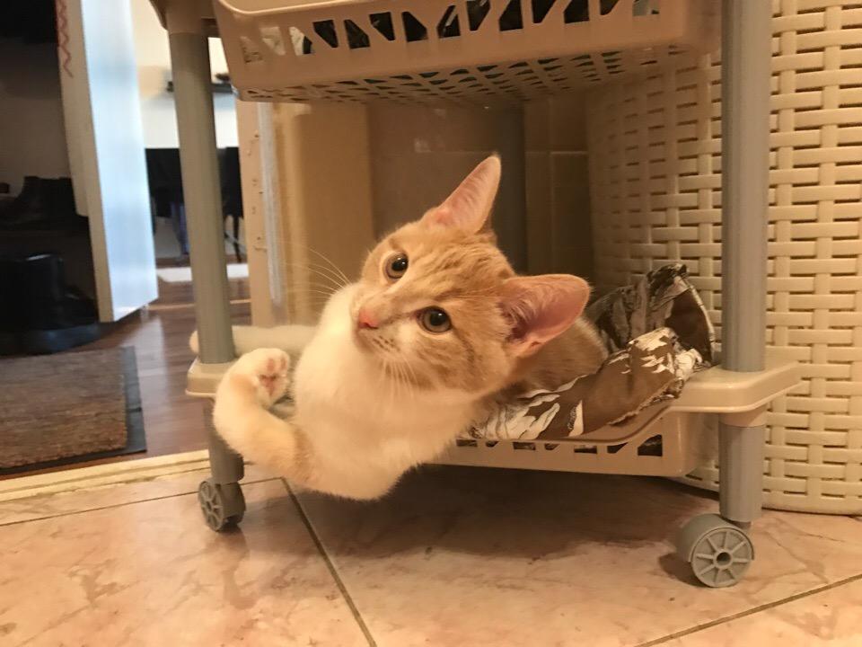даже у котика есть бицуха.. Блиц: милые котики