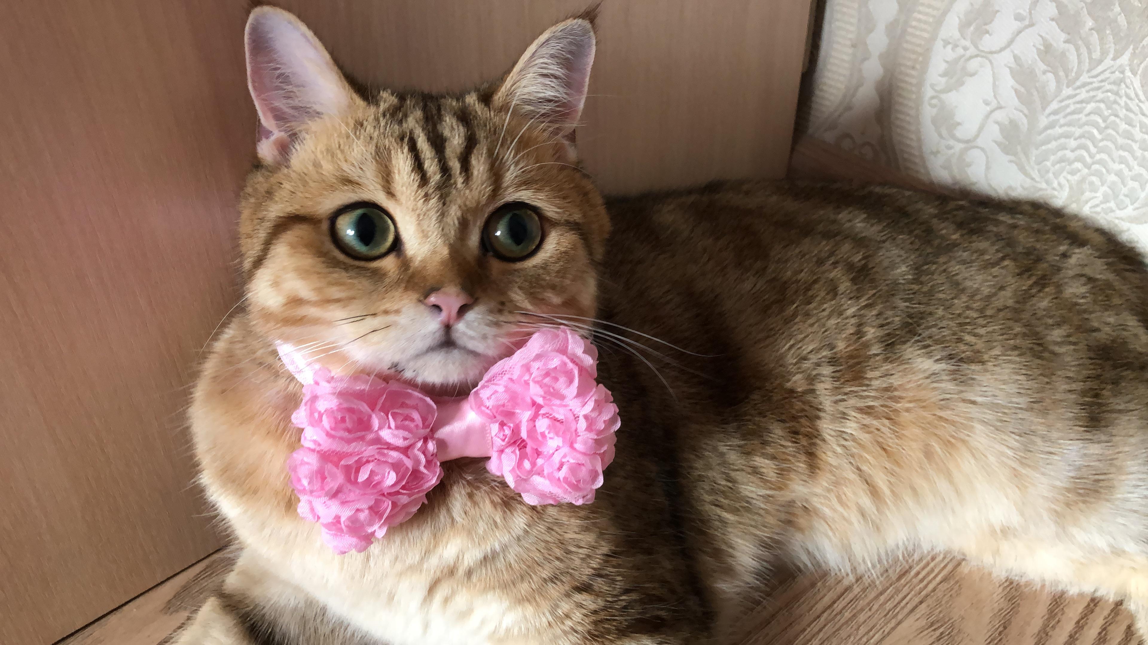 Джентельмен . Блиц: милые котики