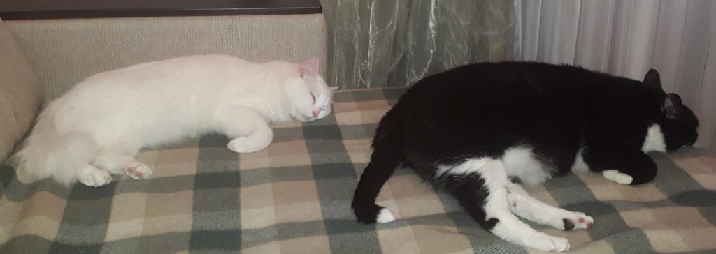 Милые котики . Блиц: милые котики