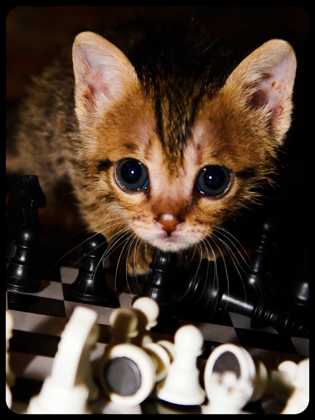 В ЗАЩИТЕ.. Блиц: милые котики