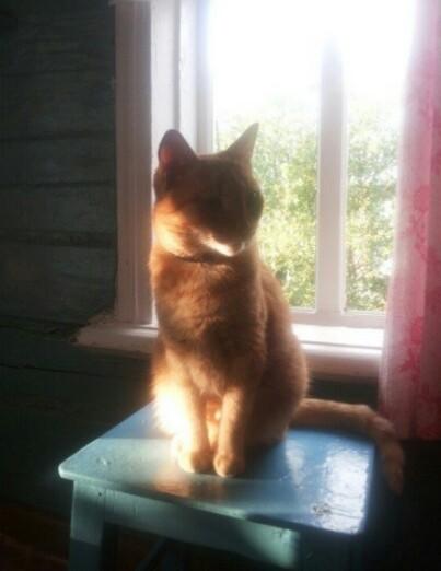 Солнечный котик. Блиц: милые котики