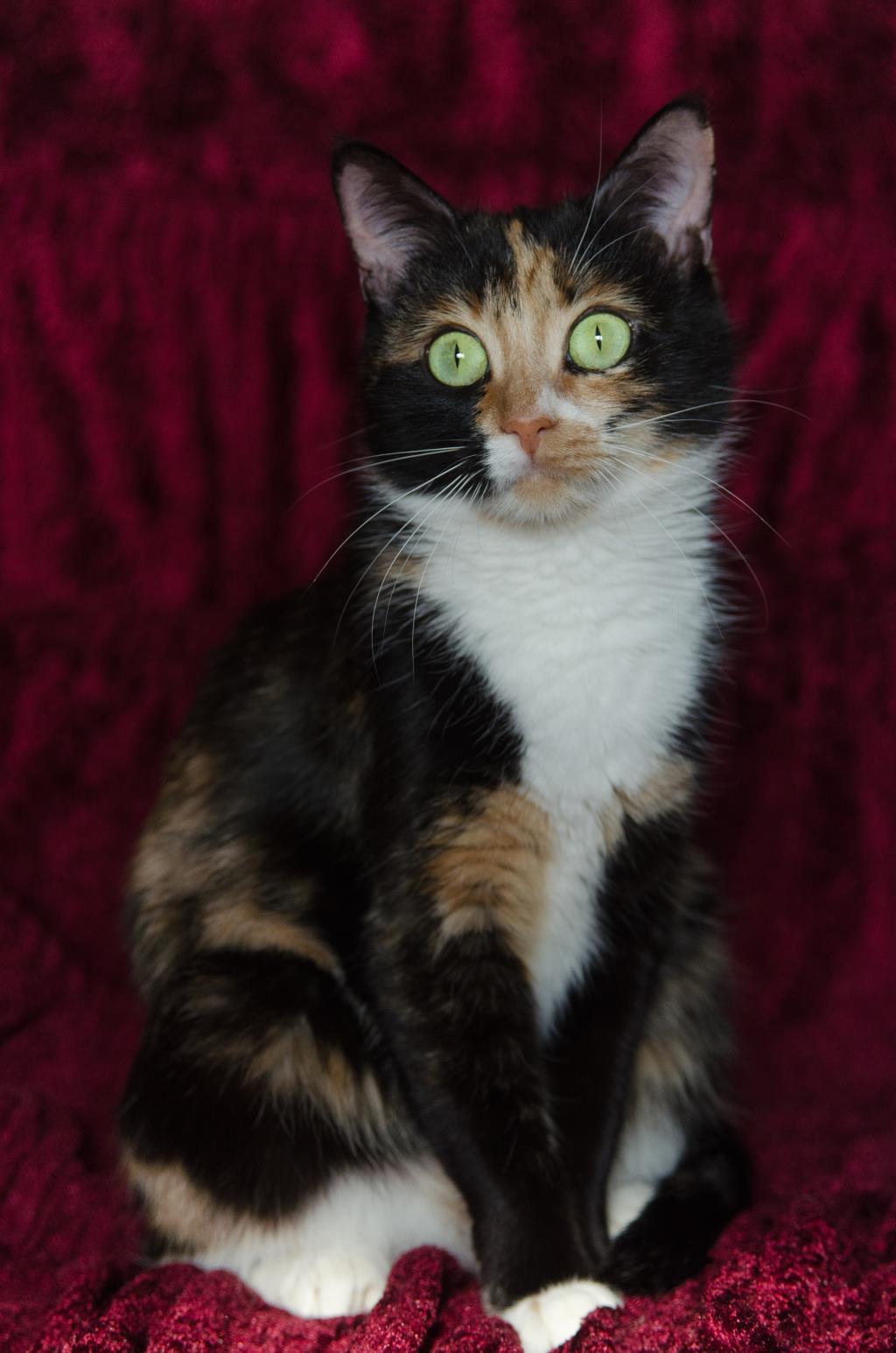 Кошка Люся. Блиц: милые котики