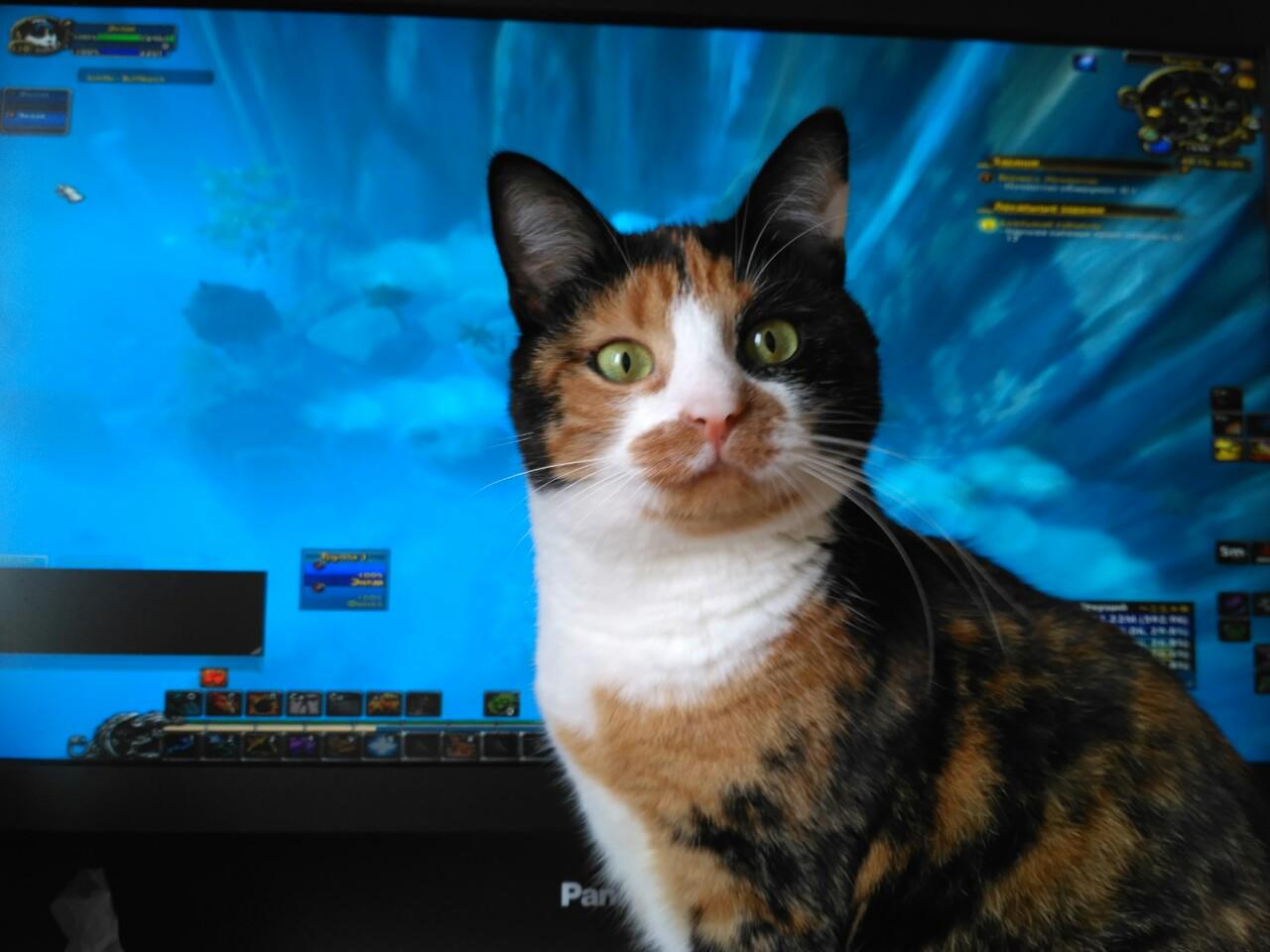 Манюша недоумевает, почему играют без неё?!. Блиц: милые котики