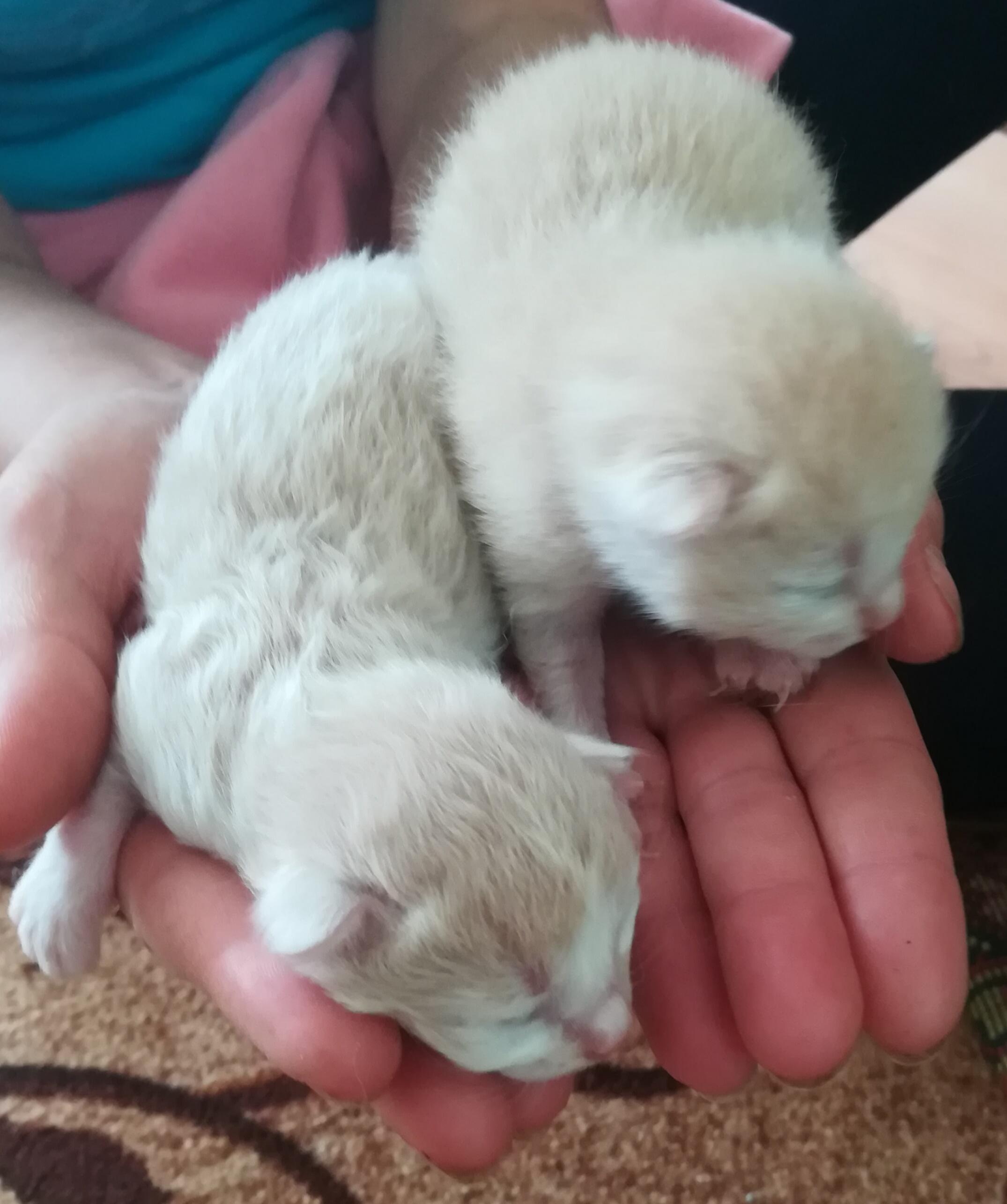 'а у нас сегодня кошка родила вчера котят' :). Блиц: милые котики