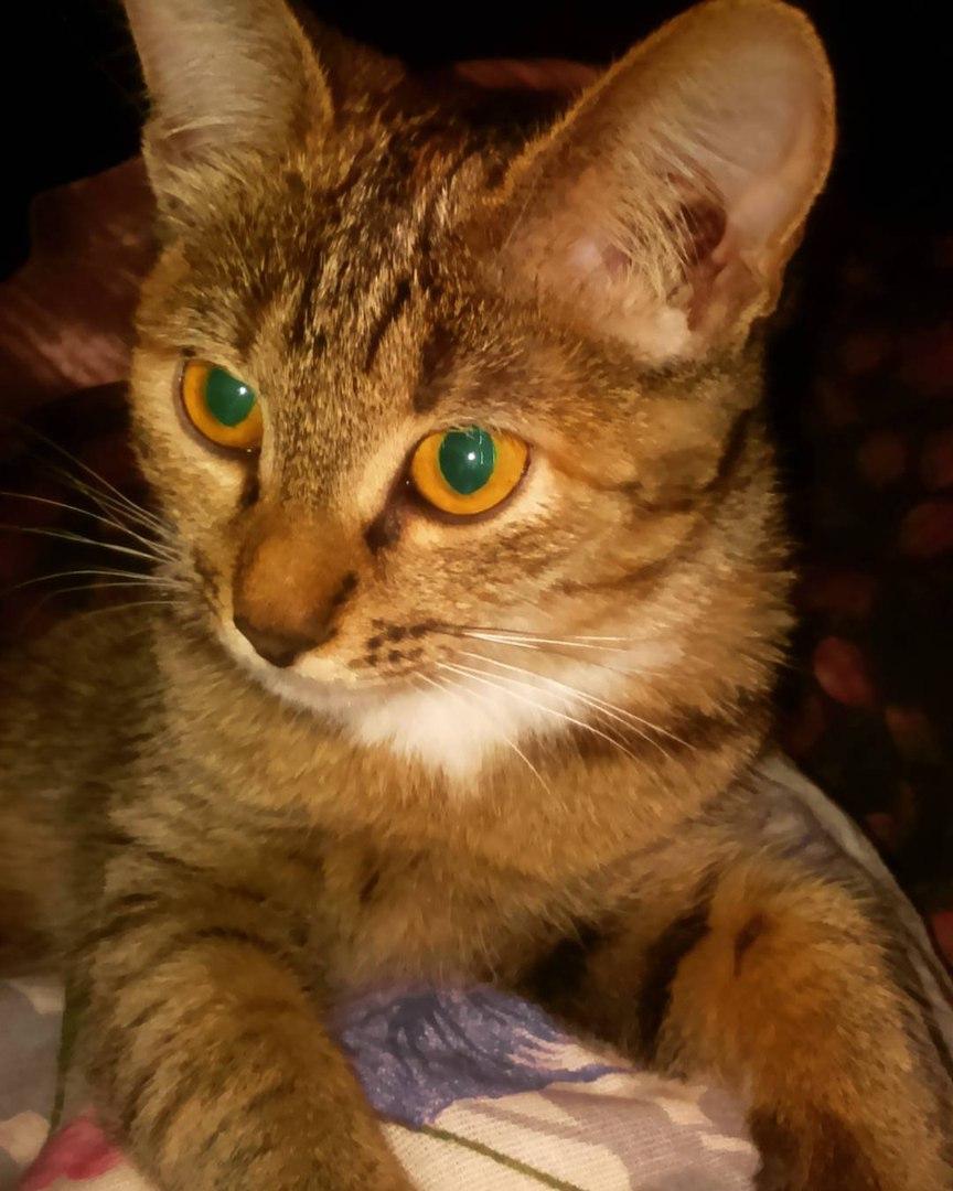 Моя Карма. Блиц: милые котики