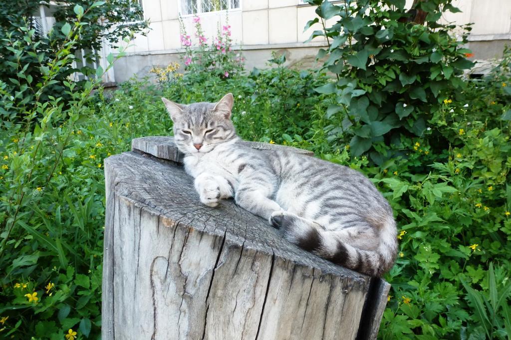Хозяин двора. Блиц: милые котики