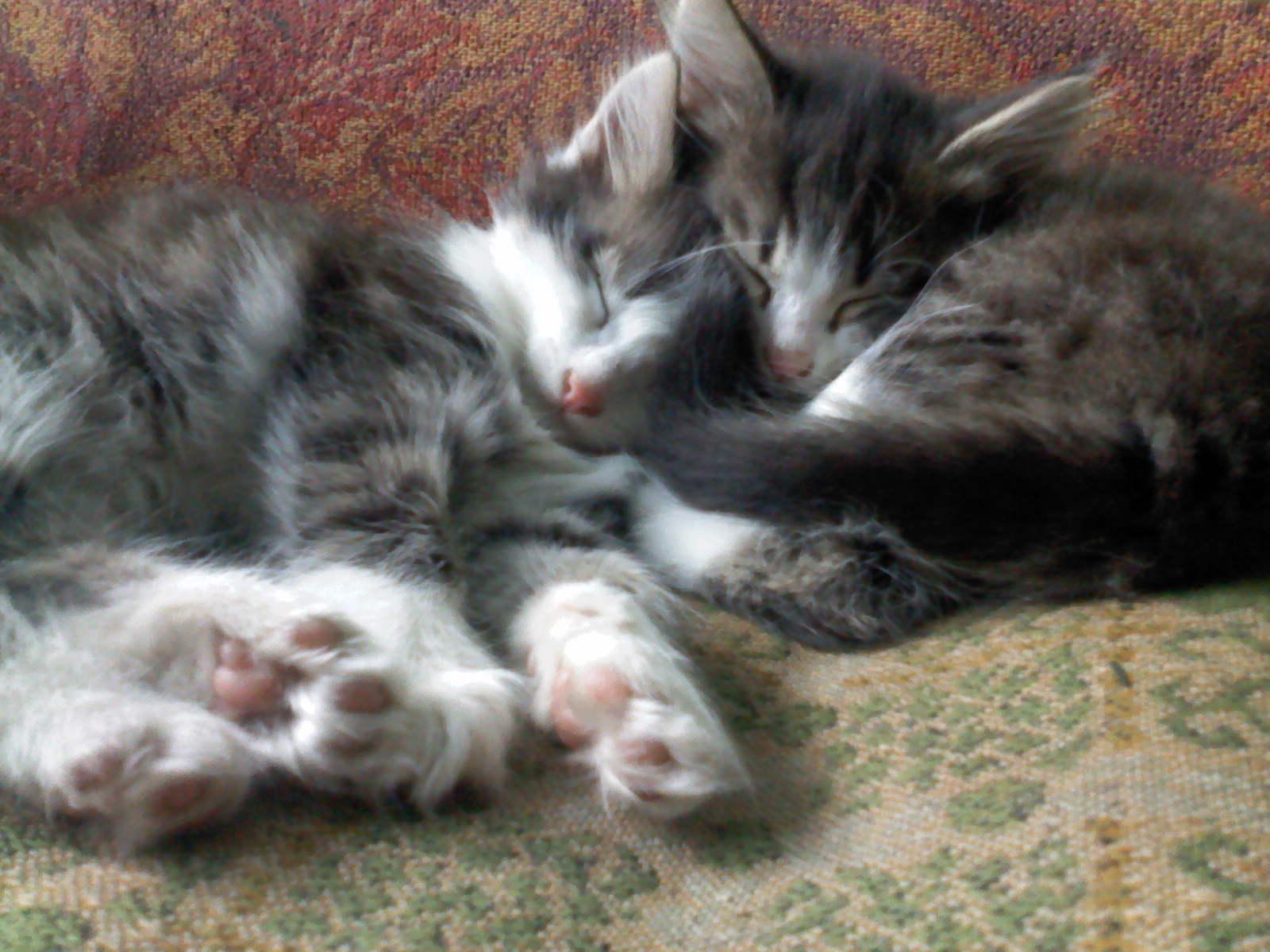 Милашки. Блиц: милые котики