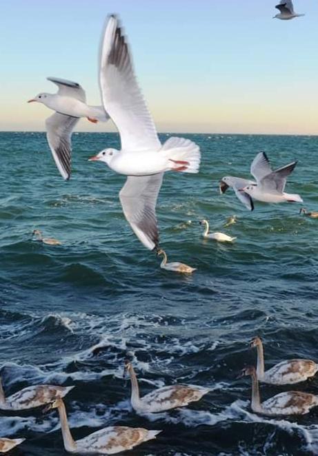 Морские аборигены. Блиц: птички
