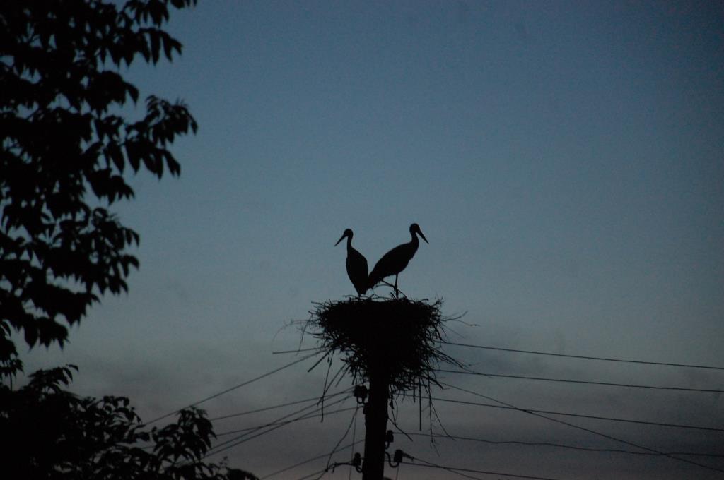 Аисты. Блиц: птички