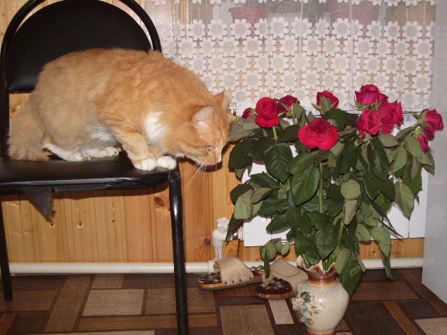 Розы должны пахнуть КОЛБАСОЙ. Блиц: милые котики