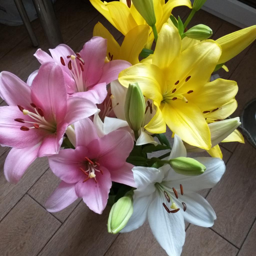 Лилии с нашей дачи. Блиц: желтые цветы
