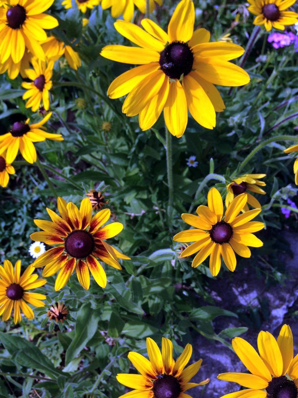 Мои любимые цветочки.. Блиц: желтые цветы