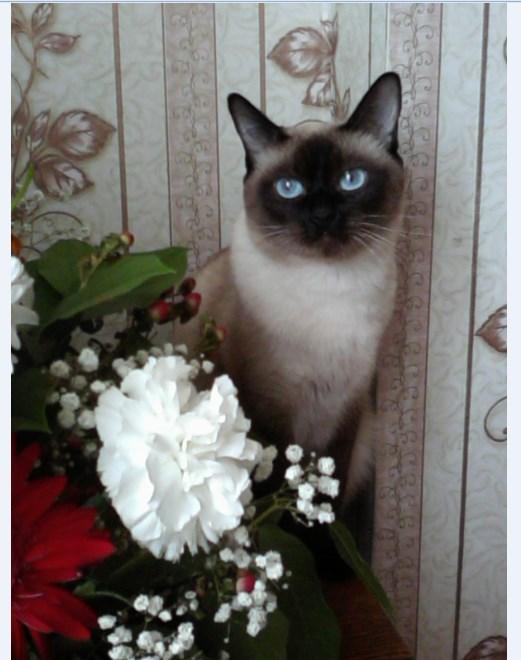 Как все девочки-люблю цветы!). Блиц: милые котики