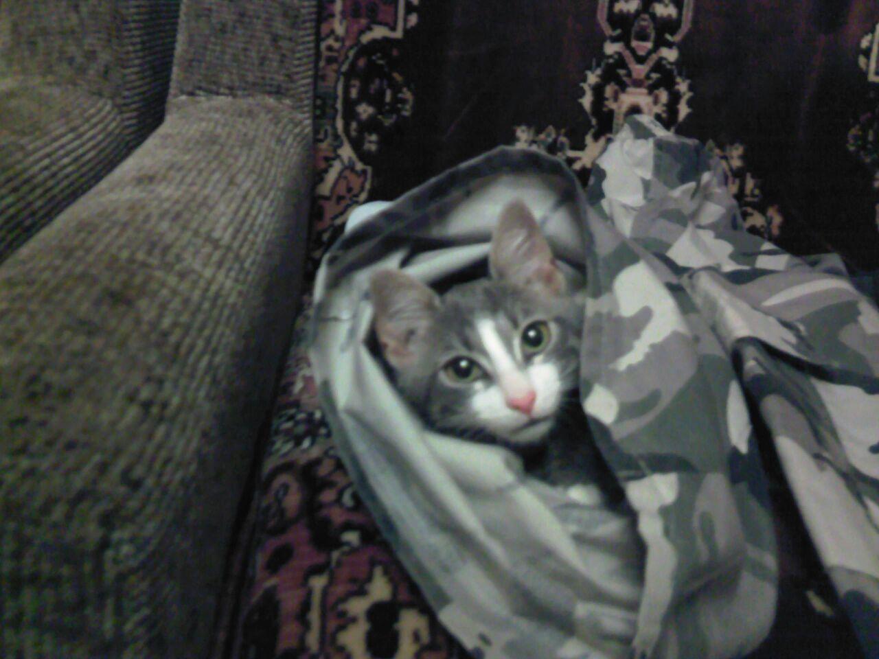 Кот в мешке. Блиц: милые котики