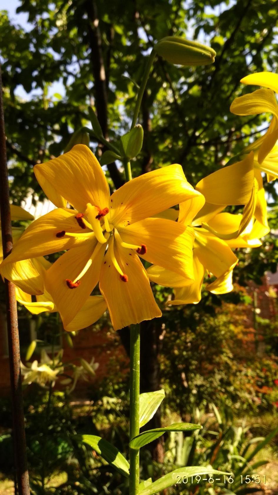 Желтый. Блиц: желтые цветы