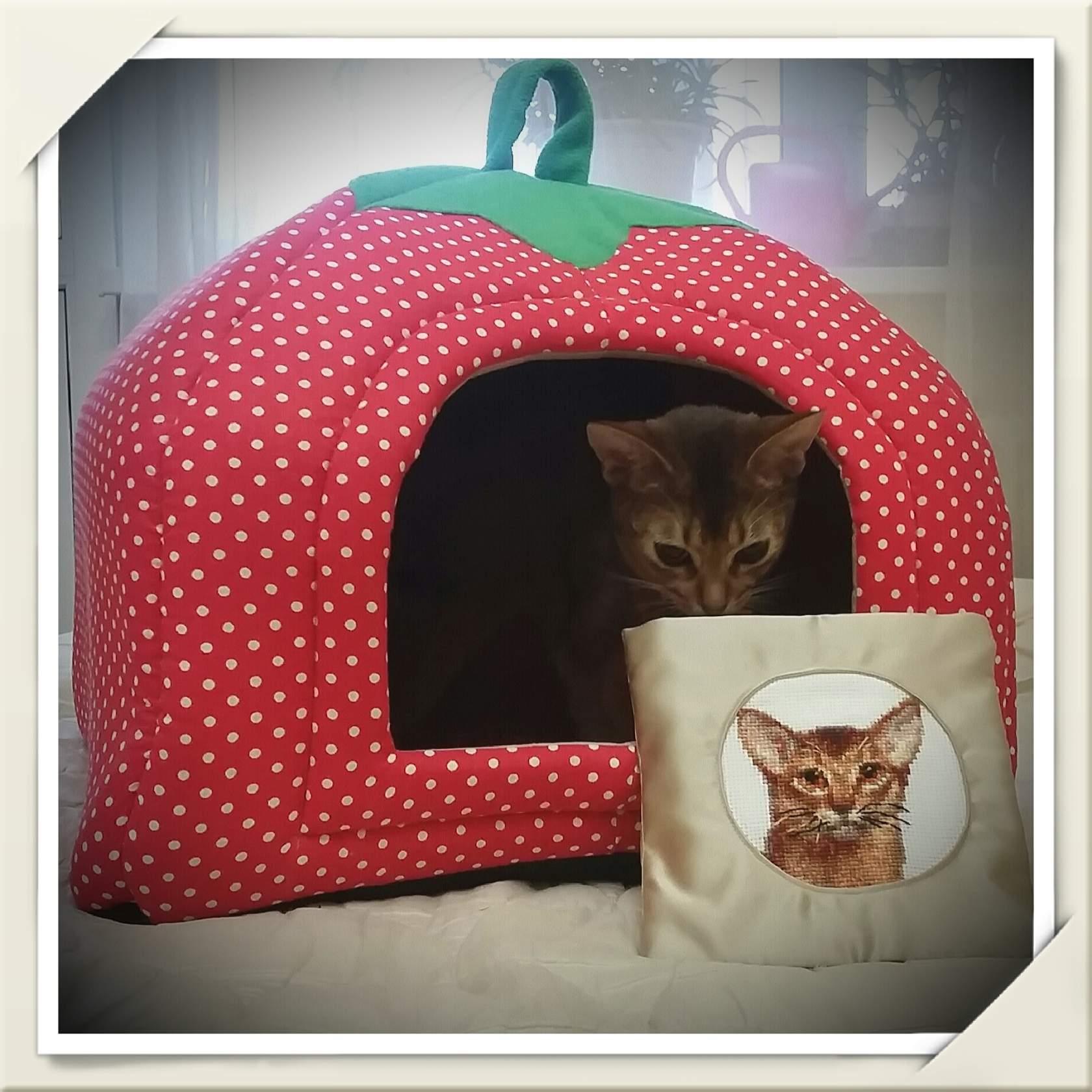 Наша Коша тихо плачет: 'Где ты, абиссинский мачо?'. Блиц: милые котики
