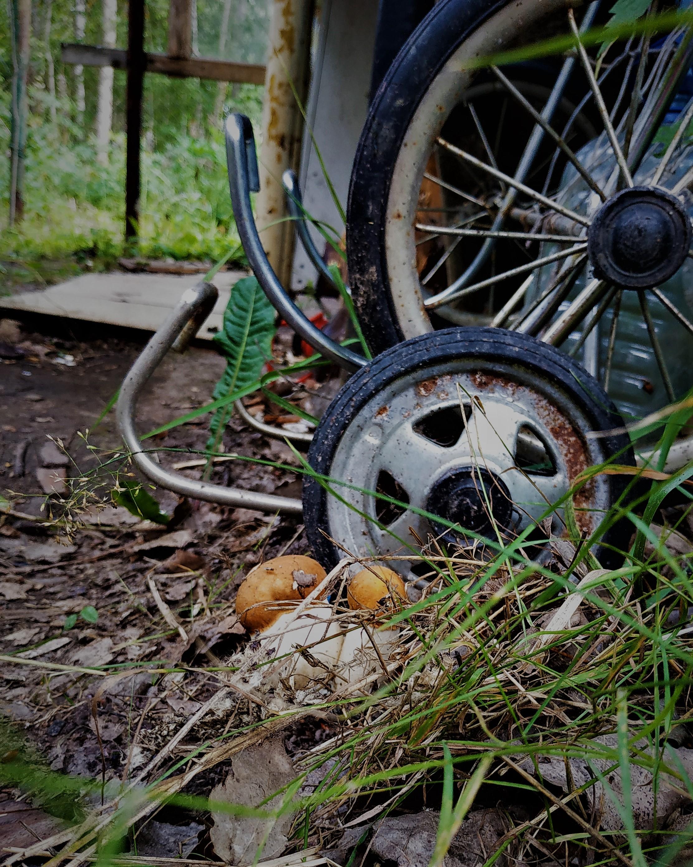 А у нас во дворе..... Блиц: грибное царство
