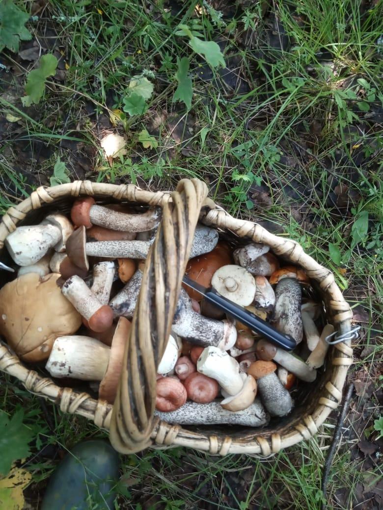 Ассорти. Блиц: грибное царство