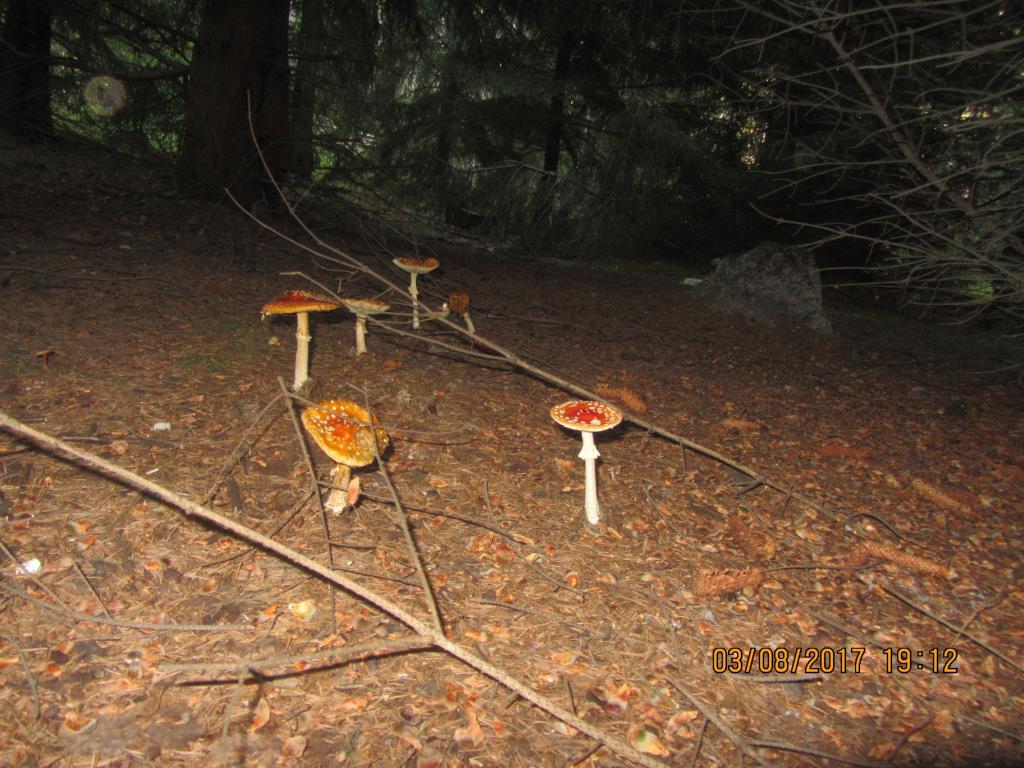 Там на неведомых дорожках.... Блиц: грибное царство