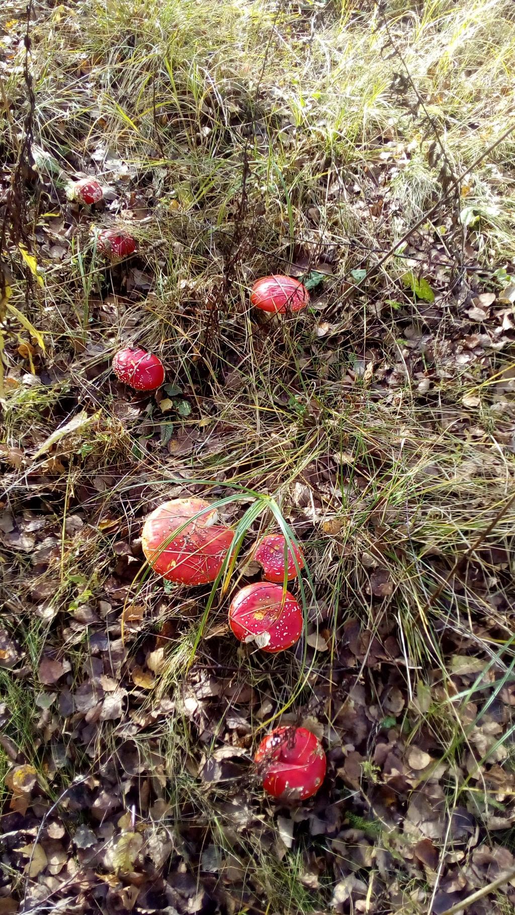 Волшебные грибы. Блиц: грибное царство
