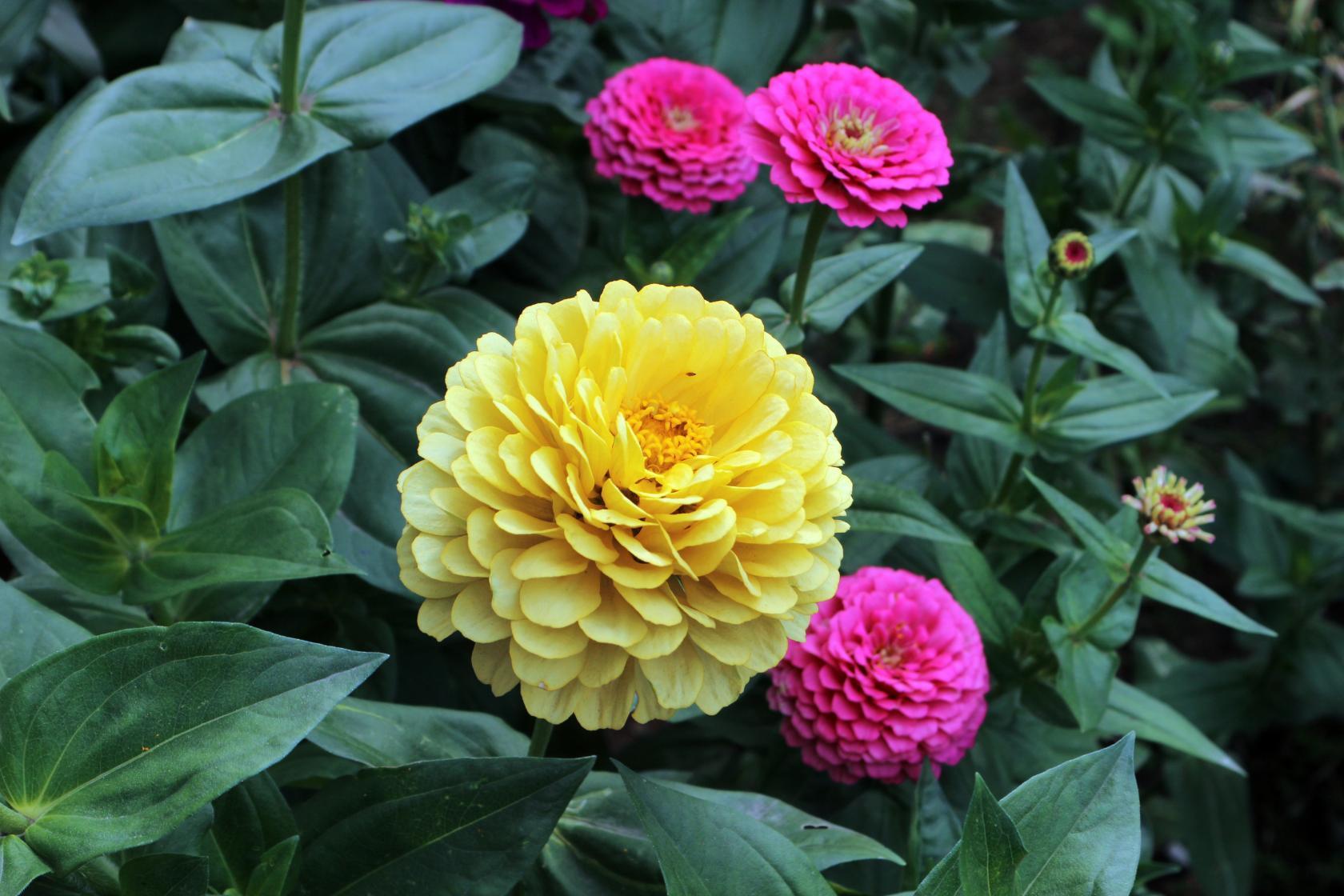 Наши цветы, красота. Блиц: желтые цветы