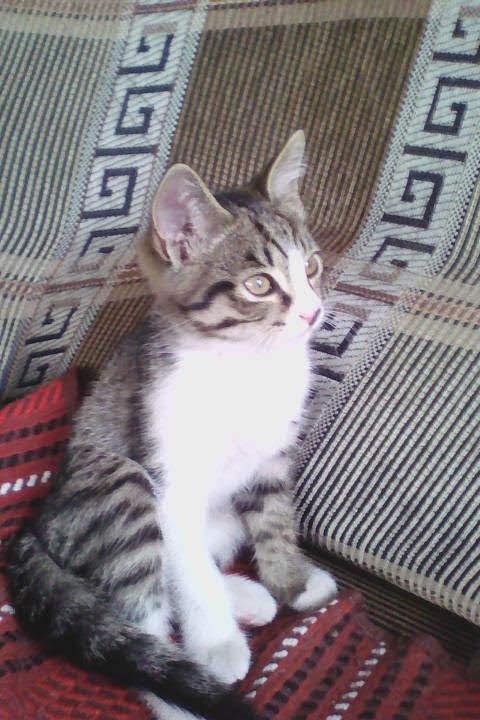 Маленький мечтатель. Блиц: милые котики