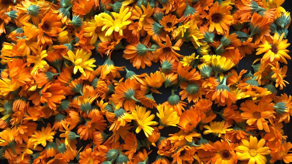 Полезные цветы к чаю ☕ . Блиц: желтые цветы