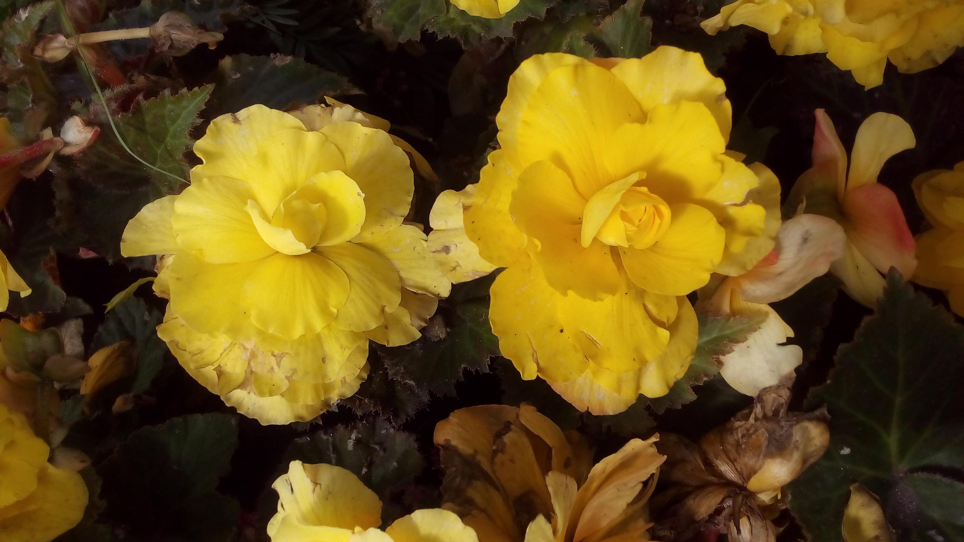 Милота. Блиц: желтые цветы