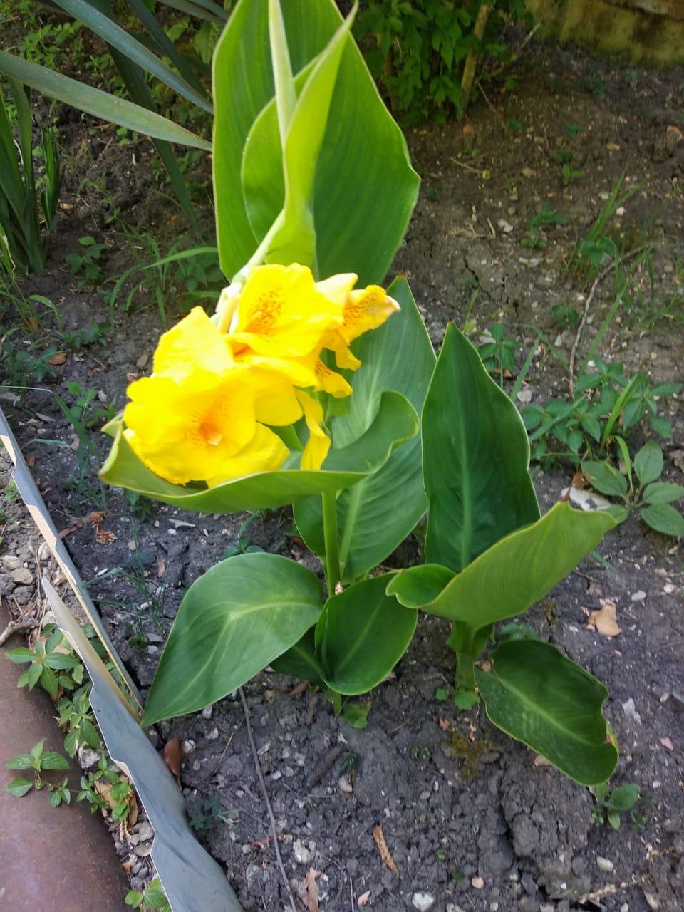 Прекрасный жёлтый 🐥. Блиц: желтые цветы