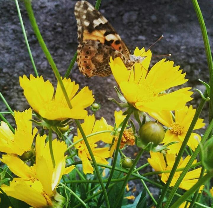 Бабочка прилетела. Блиц: желтые цветы