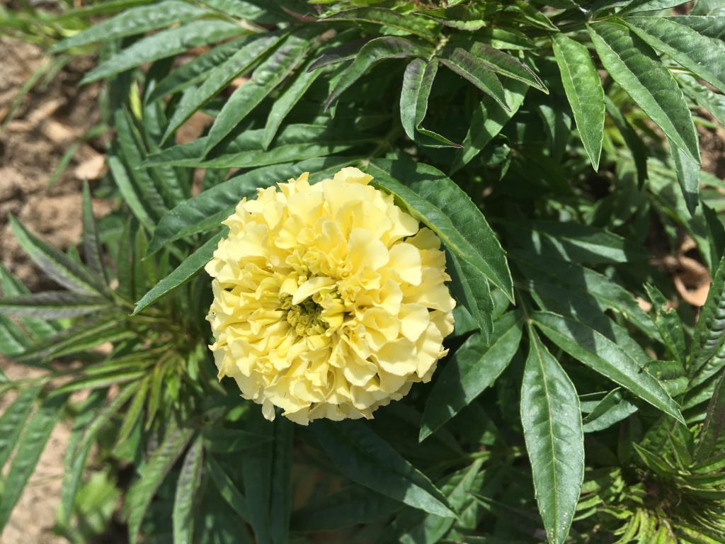 Солнышко . Блиц: желтые цветы