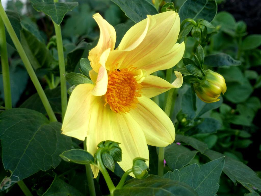 Желтенький скромный цветочек. Блиц: желтые цветы