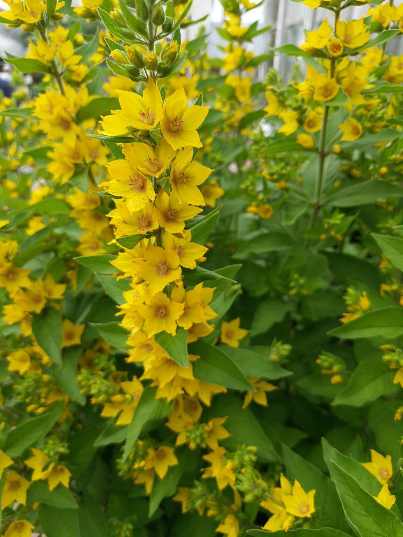 желтые цветочки. Блиц: желтые цветы