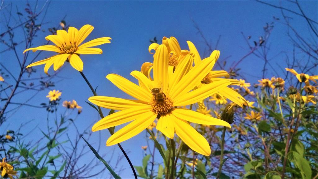Мои солнышки. Блиц: желтые цветы