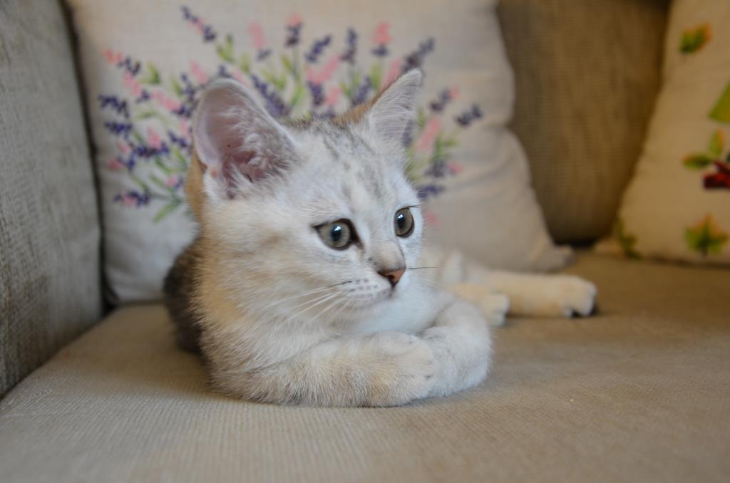 Бусинка. Блиц: милые котики