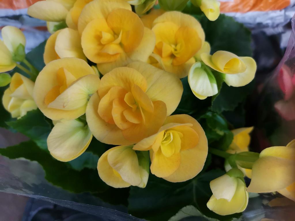 Жёлтые цветы. Блиц: желтые цветы