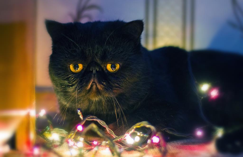 Бегемот. Блиц: милые котики