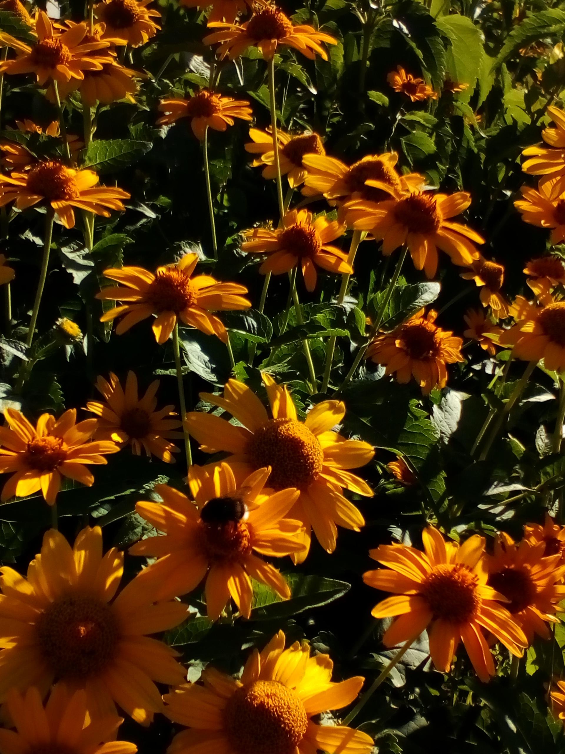желтое лето. Блиц: желтые цветы
