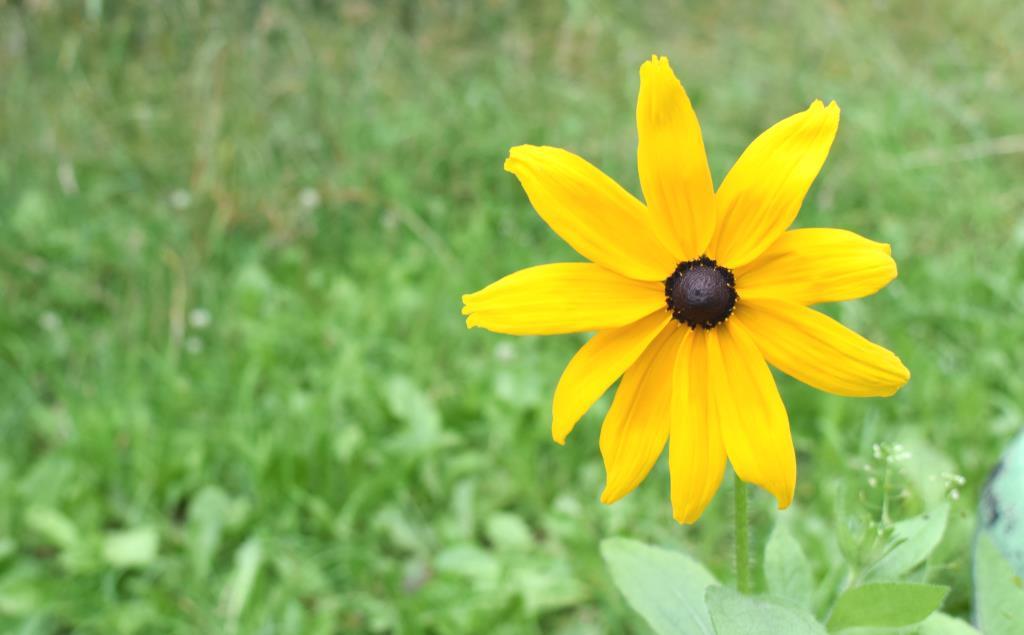 Желтый цветок. Блиц: желтые цветы