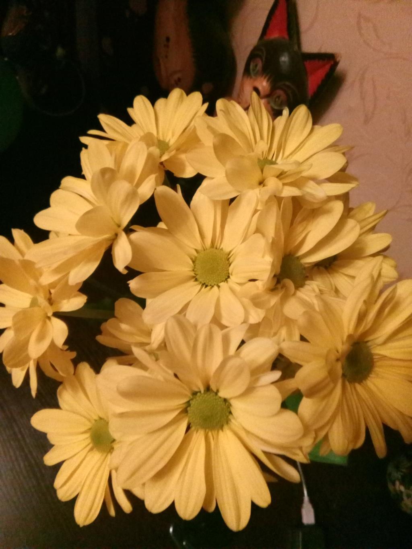 Хризантемы. Блиц: желтые цветы